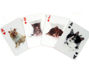 Kortlek 3-D Katter