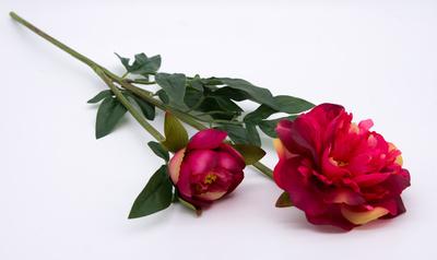 Dekorations blommor Rosa