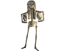 Väggedkoration Skelett - plåt